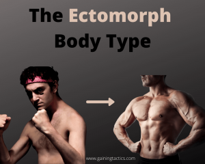what is an ectomorph body type
