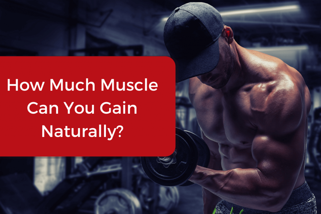 how much muscle can you gain in a year