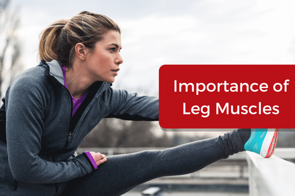 importance of leg muscles